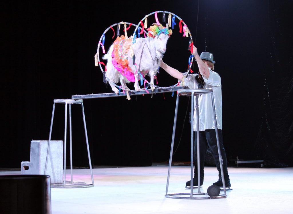 картинки артисты цирка животные строки сразу